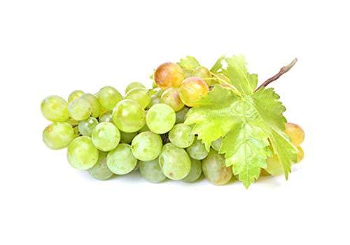Kernlose Weintraube 'Primus' (Vitis 'Primus') hell, köstlich und gesund!