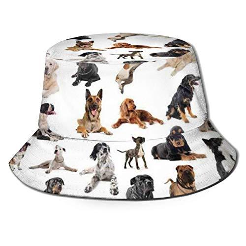 Imagen de Sombreros de Cubo con Perros de Raza Pura Perro Pastor Australiano Boxer Belga Mastín Italiano Pedigrí Sombrero de Sol de Playa Vintage para protección Solar