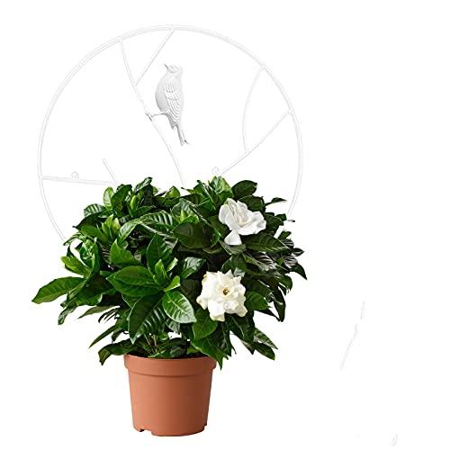 Clacce Balkon Topfpflanze, Runden Metallvogel, Rankhilfe für Kletterpflanzen, Kletterpflanze Gartendeko, wetterfest Rost Deko für Garten Terrasse Gartenstecker aus Eisen