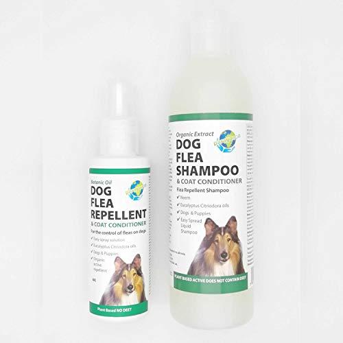 PARAGON Dog Flea KIT with 2 Products, Shampoo 400ml and Spray 150ml, Puppy Friendly, Eucalyptus Fragrance, No Pesticides, Easy Spread Liquid Shampoo