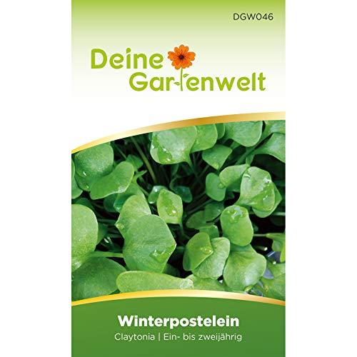 Winterpostelein | Winterportulak | Samen für Portulak | Salatsamen | Tellerkraut | Saatgut für Postelein