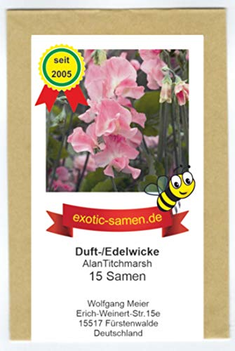 Duftwicke - Edelwicke - Bienenweide - Alan Titchmarsh - bis 150 cm - 15 Samen
