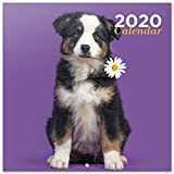 Erik® - Calendario 2020 da muro cani. Licenza ufficiale, 30x30 cm, 12 mesi