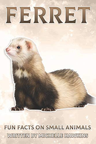 Ferret Fun Facts Small Animals 7
