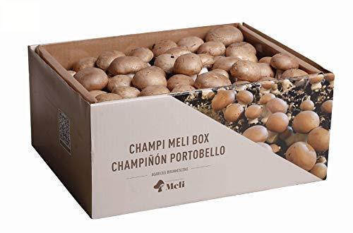 SETAS MELI | Kit Auto Cultivo Champiñon Portobello | Para cultivar en casa | Crece en 10-15 dias | Kit perfecto para regalar | Hecho en España
