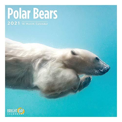 2021 Polar Bears Wall Calendar by Bright Day, 12 x 12 Inch, Cute Arctic Snow Animals