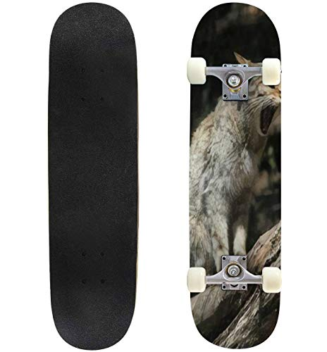 Classic Concave Skateboard European Wildcat Felis silvestris silvestris Wild Life Animal Longboard Maple Deck Extreme Sports and Outdoors Double Kick Trick for Beginners and Professionals