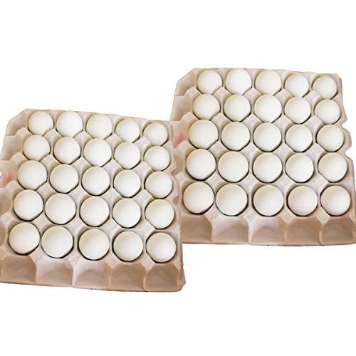 イヨエッグ インカの卵 50個 詰合せ 卵 愛媛県産 常温 鶏卵 たまご 国産 愛媛