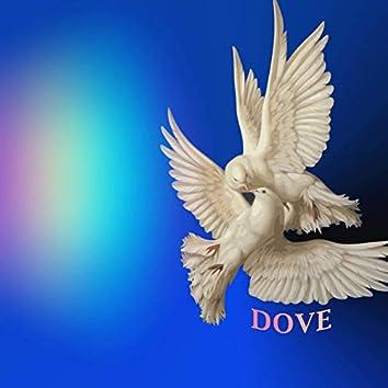 Dove (Instrumental)