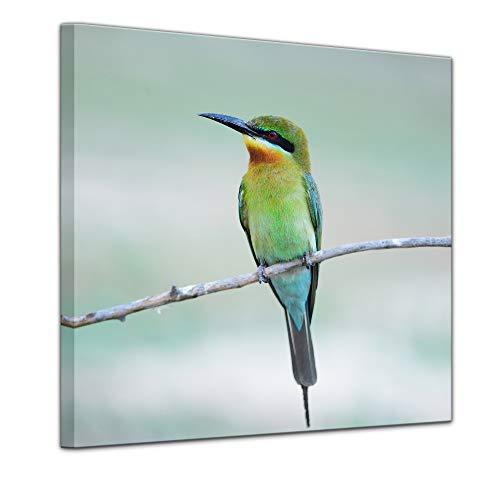 Bilderdepot24 Bild auf Leinwand | Blauschwanzspint | in 60x60 cm als Wandbild | Wand-deko Dekoration Wohnung modern Bilder | 211504