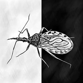 Jag är en insekt