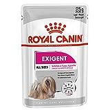 ROYAL CANIN Alimento húmedo Exigent para Perros con Apetito Exquisito, Textura Paté, Caja Completa 12 Sobres x 85 gr