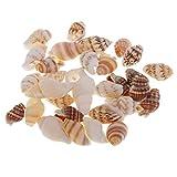 MagiDeal 30pc Sea Shells Conchas de Playa Mixtas para Velas, Decoración, Manualidades, Tanque