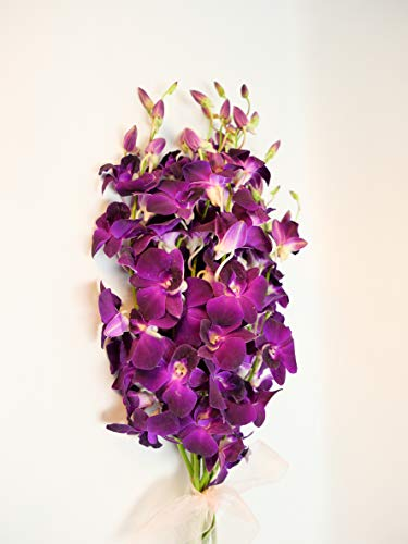 Athena's Garden Dendrobium Full Box of Fresh Cut Orchids, 7 Bunches, Deep Purple