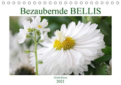 Bezaubernde Bellis (Tischkalender 2021 DIN A5 quer)