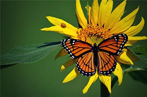 BVCK Mariposa Girasol 1000 Piezas De Puzzle De Paisajes Naturales para Adultos Y Niños