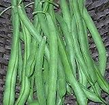 sanhoc semi pacchetto: fagioli verdi lake274 60 seeds facile da coltivare con yeilds massive