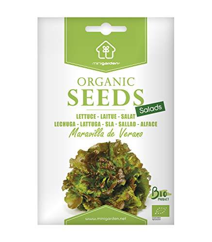 Bataviasalat, zertifizierte biologische Samen von Minigarden, enthält zwischen 1500 und 2100 Samen