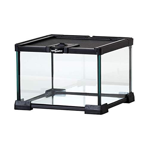 "REPTI ZOO Mini Reptile Glass Terrarium Tank Full View Visually Appealing Reptile Glass Habitat Cage 8"" x 8""x 6"""