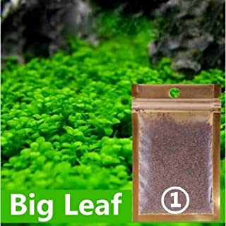 Aquarium Grass Seed 2 Pack(Love Leaf)