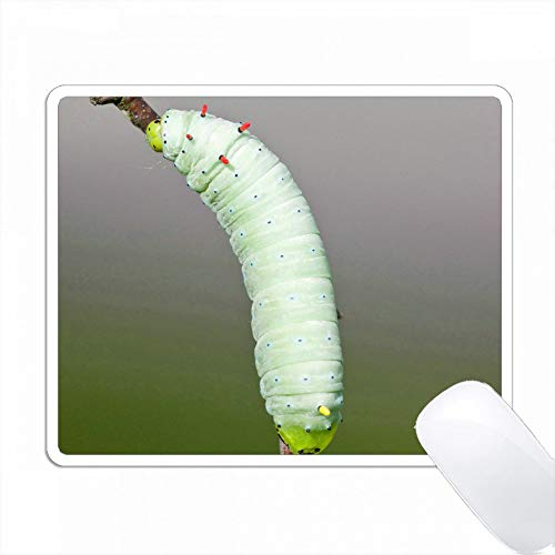 プロメテア(Promethea)虫の宿主植物、Wild Cherry、Marion Co. PC Mouse Pad パソコン マウスパッド
