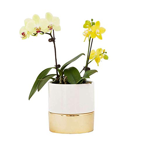 FEIAA 6 Inch Planter Ceramic Plant Pot Flower Holder with Holes and Drainage White Gold for Home Garden Indoor Outdoor