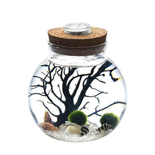 NewDreamWorld - Kit per acquario con LED in cristallo bianco, 10,9 x 11,4 cm, con palline di muschio da 12 mm, con conchiglie di cristallo, ideale com