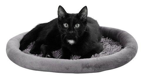 """Kerbl Kuschelbett """"Sweety"""" für Katzen, Katzenbett in Grau oder Beige, 48 x 40 cm, mit Antirutschbeschichtung, waschbar (Grau)"""