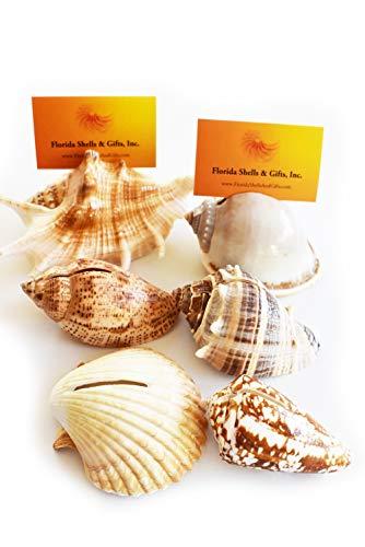Set of 12 Genuine Seashell Place Card Holders Beach Wedding Favor Nautical Party Decor Sea Shell Table Sets