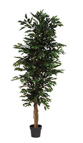 Verdevip Ficus Benjamin Verde - Albero Artificiale da Arredo Interno con Tronco Vero - Alto 200 cm Largo 70 cm