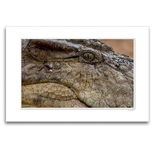 Calvendo Premium Lienzo Textil 120 x 80 cm Formato Transversal Emocional: los Ojos de los Animales. / Versión CH Imagen de Pared, HD de Imagen en Bastidor, Listo de Ingo Gerlach GDT Animales