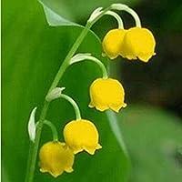 年間を通して植えられた谷の球根の10個のユリ多年生塊茎ベル型の花DIYホームガーデン植栽自然の装飾新鮮な香り特別な色を表示に使用できます
