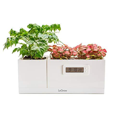 LeGrow Smart Garden- Vaso Intelligente - Coltivazione Indoor - idroponica Kit- ModelloTG-S (Science - Magical Plant Clock) Vaso Indoor con Orologio Senza batterie