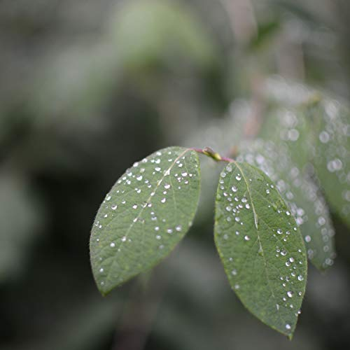 Strong Rain Vietnam