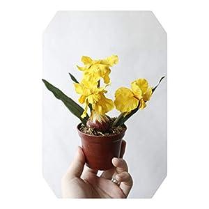 Silk Flower Arrangements Dreamture Minir Artificial Bonsai Iris Silk Flowers Bonsai Plants Artificial Flowe for Wedding Home Party Decorative-Yellow-