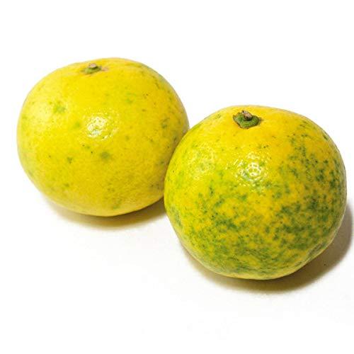 和風レモン(ヘツカダイダイ) 1.5kg 鹿児島県産 無農薬