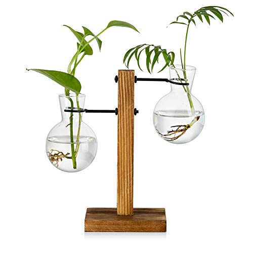 Propagation Station with Wooden Rack 2 Bulb Vintage Avocado Vase Glass Test Tube Vases for Flowers Acorn Plant for Home Table Desk Indoor Decor