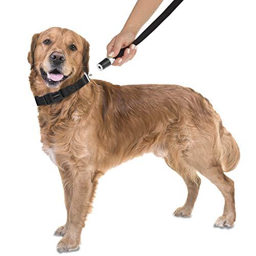 GoLeyGo Hundeleine mit Halsband GoLeyGo Schwarz Größe L 1St.