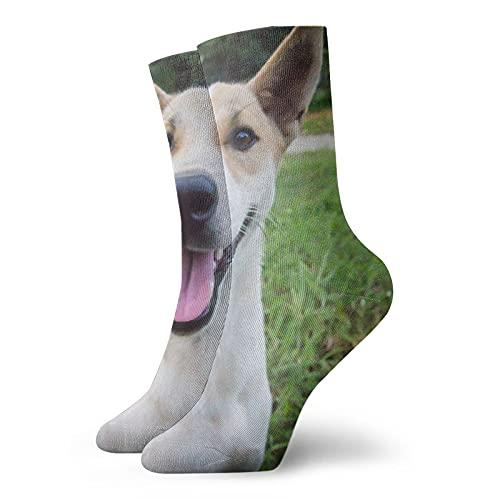 QUEMIN Perro tailandés mirando a la cámara, sonriendo en el jardín Inicio Hombres Mujeres Calcetines suaves de tobillo Calcetines deportivos deportivos informales con estampado divertido