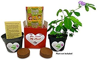 TickleMe Plant You Tickle My Heart Gift Box - Two Can Share Growing The Only House Plant That Closes Its Leaves When Tickled or When Blown a Kiss.