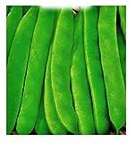 semi per coltivare fagiolo nano nassau phaseolus vulgaris fagioli semi per coltivare agricoli fg021 400 sementi circa alta qualità