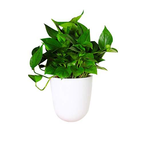 Macabolo Maceta de esquina para plantas, para colgar en la pared, con autorriego, de plástico