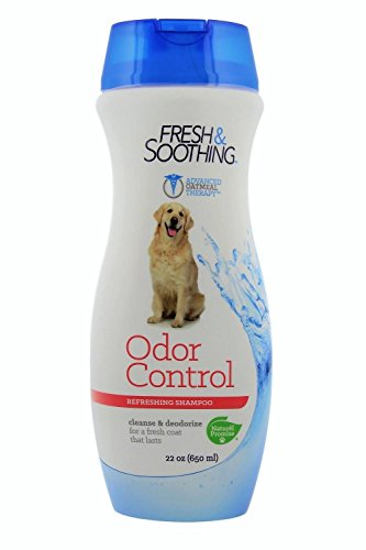 Best Dog Odor Shampoos