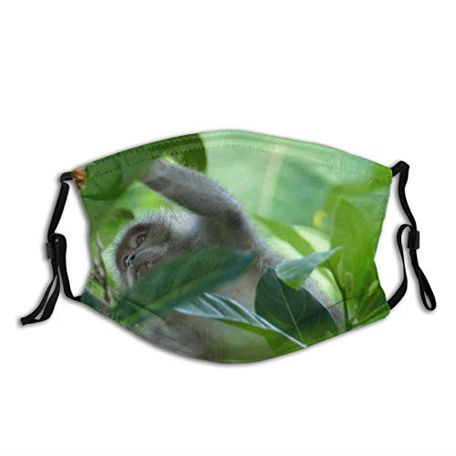 NUFR Free KOH Pictures Birds Dragon Jungle Images Monkey Wallpapers Fruit Wildlife Krabi Dust Washable Reusable Filter and Reusable Mouth Warm Windproof Cotton Face