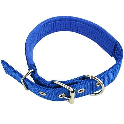 CZFSKCZ Correa Perro, Pet Collar Perros Nylon Collar Ajustable Multi Colores Opciones Opcionales DURANDOBLE Collar ANTILICA Accesorios DE Pet PERDICIOS DE LOS Perros DE Perros (Color : A, Size : 4)