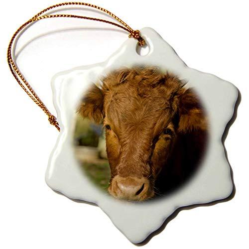 3dRose Danita Delimont - Animals - Snoqualmie, WA. Baby red Cow. - Ornaments (ORN_332860_1)