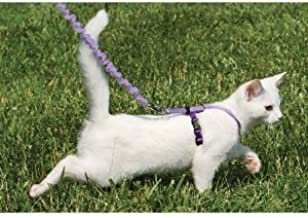 PREMIER Come With Me Kitty Cat Harness and Leash Large Royal Blue