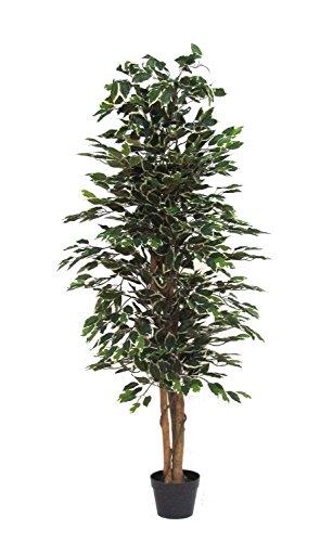 Plante artificielle (Ficus benjamina à feuillage panaché) pour décoration d'intérieur, avec tronc véritable, h 150 x l 55 cm