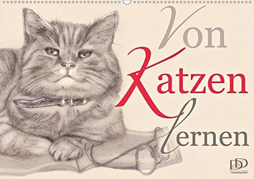 Von Katzen lernen (Wandkalender 2021 DIN A2 quer)