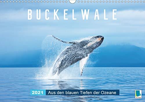 Buckelwale: Aus den blauen Tiefen der Ozeane (Wandkalender 2021 DIN A3 quer)